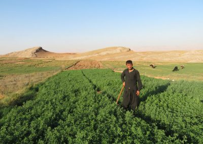 Carolyne Douche - Shorsh (Northern Iraq), October 2019 - Small cultivated field.